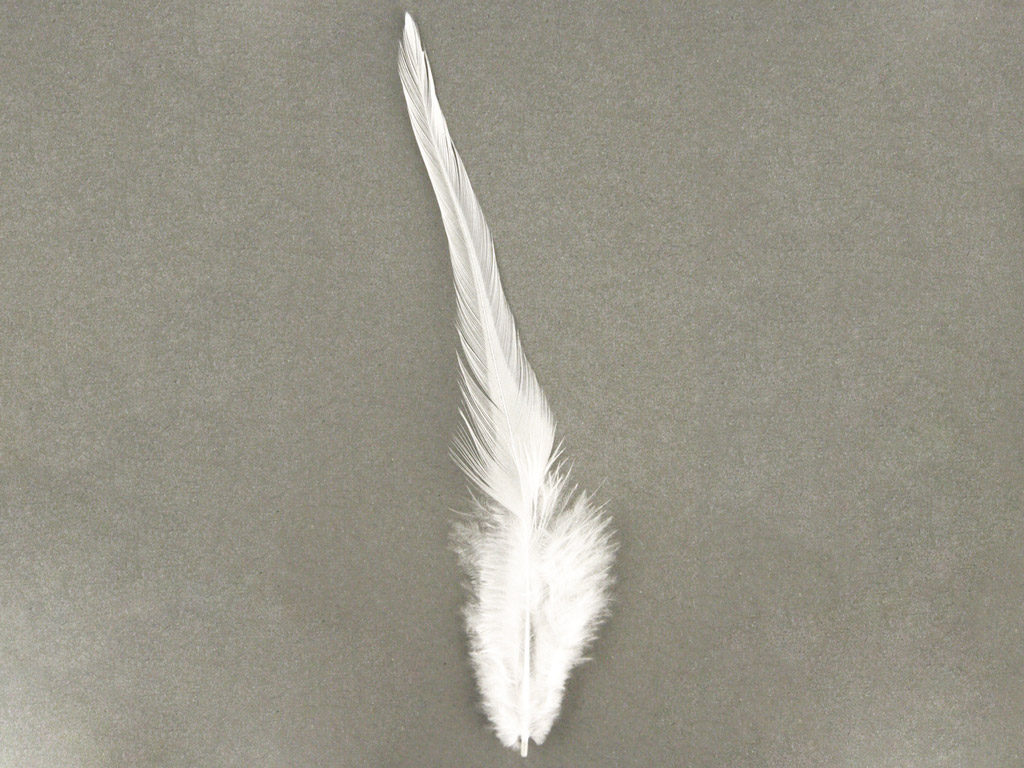 Dekoratīvās spalvas Rayher Trendy 10-15cm 2g balta