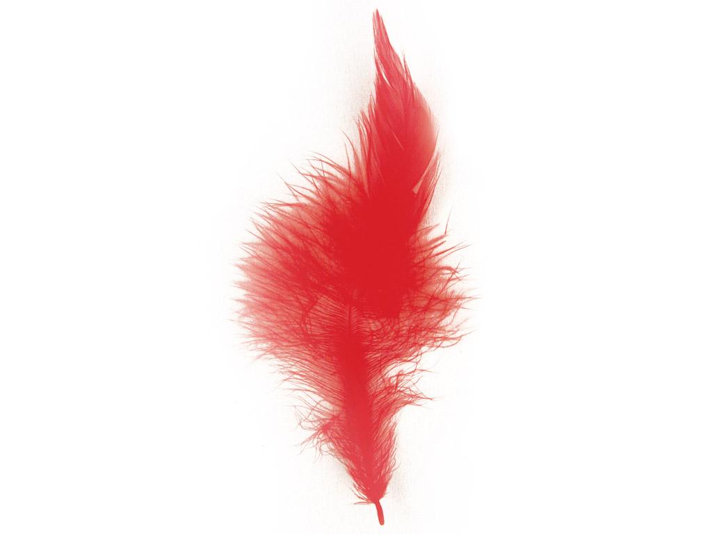 Dekoratīvās spalvas Rayher Trendy 10-15cm 2g sarkana