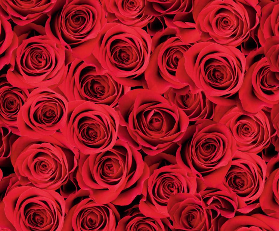 Kartong pildiga Ursus 49.5x68cm/300g Roses red